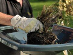Электрический садовый измельчитель веток и травы: обзор популярных моделей