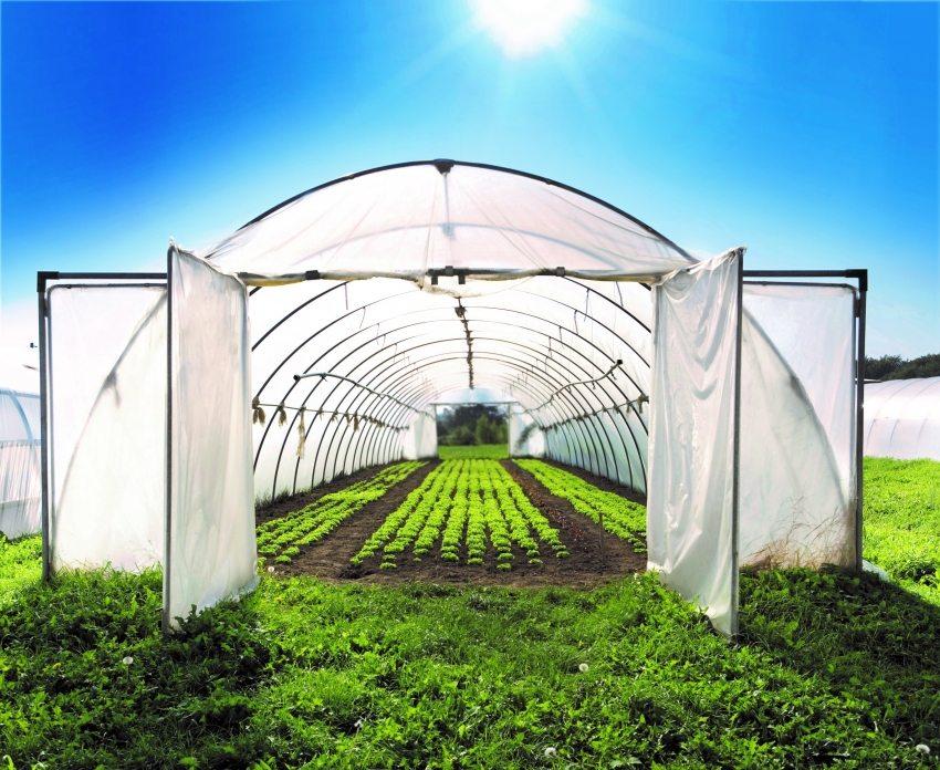 Арочный парник предназначен для частного выращивания садово-огородных культур