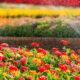Дождеватель для полива: создание благоприятного микроклимата для растений