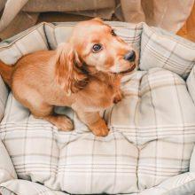Лежанка для собаки своими руками или выбор готового изделия в магазине