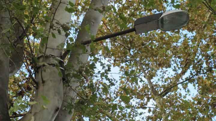 крепеж лентой к дереву