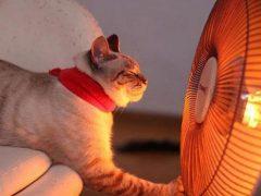 5 причин почему не работает тепловентилятор — как починить своими руками, ремонт дуйчика обогревателя.