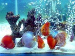 Делаем аквариум своими руками